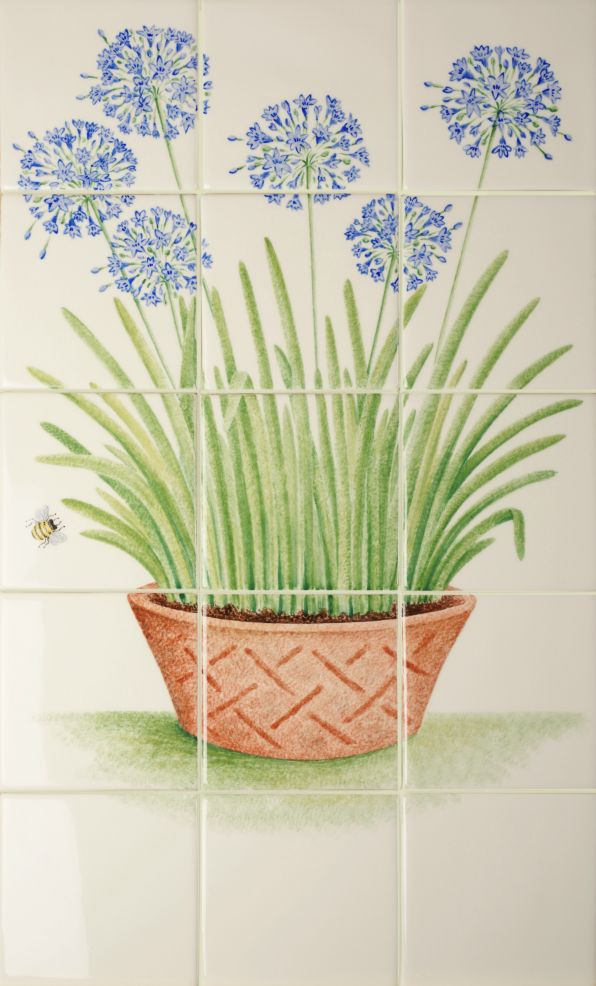 Terracotta Pot with Agapanthus